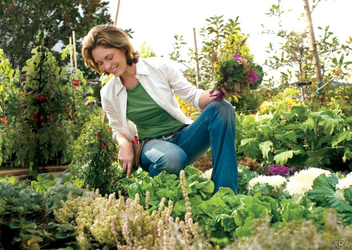 mozzie gardening